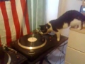 Gato sem queda para ser DJ