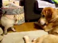 Cão e gato: saber brincar