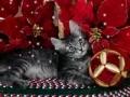 Os animais desejam-lhe Boas Festas!