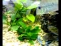 novos peixinhos...