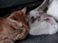 Gato e coelho criam laços de amizade