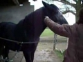Educar um cavalo