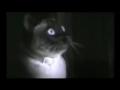 Gatos: Ria-se destes momentos