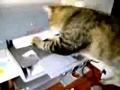 a historia de um gato e de uma impressora