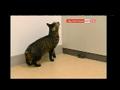 Genética: rato alterado para gostar de gatos
