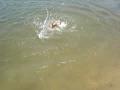 Como nadar de pé